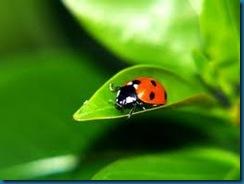 simplicity =ladybug