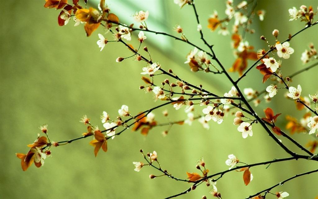 [Spring-flowers-spring-22176435-1920-1200%255B3%255D.jpg]