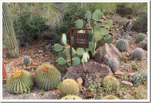 120728_ArizonaSonoraDesertMuseum_093