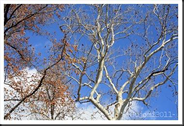 2011 11 13 IMG_6768w