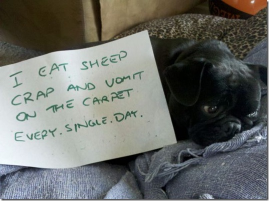 dog-shaming-bad-15