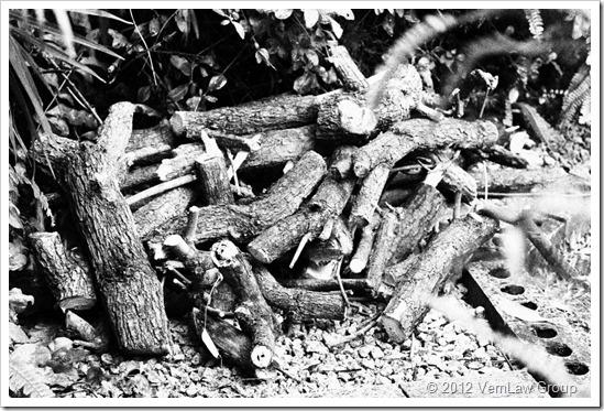 WoodchopIMG_5604