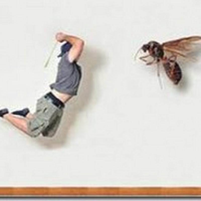 الحشرات المنزلية في الصيف وكيفية التخلص منها