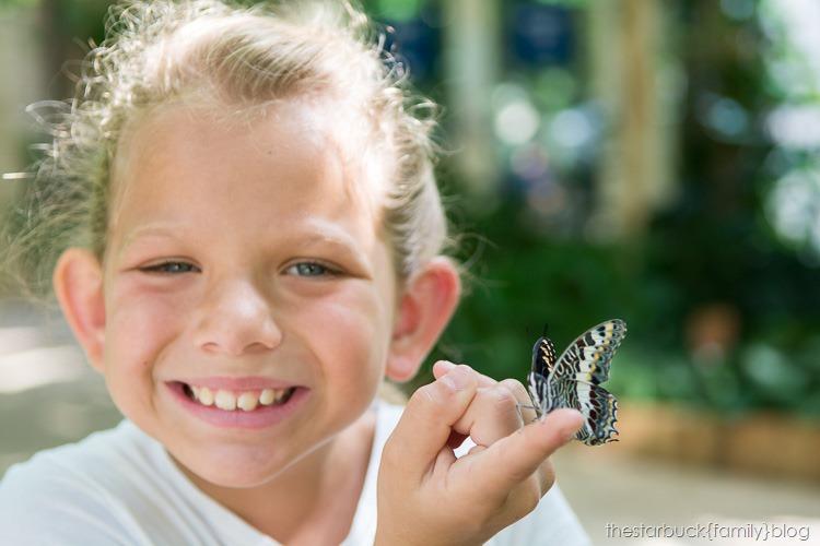 Callaway Gardens butterfly garden blog-17