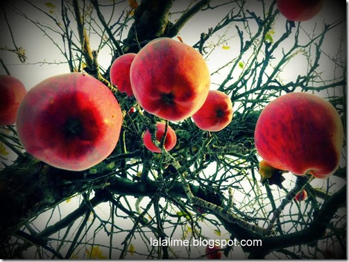 1-apples_Barb-Derksen