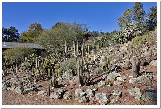 111228_UCBG_cactus_garden2