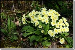 Brandon Marsh - Early spring