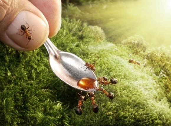 Life-of-Ants-Andrey-Pavlov-17
