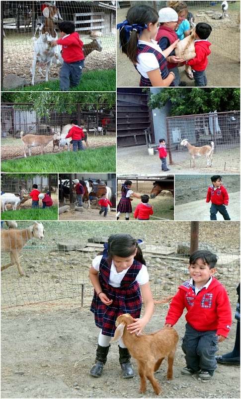 gf2 animals v2