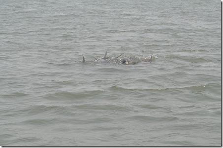 06-06-11 Tybee Beach 018