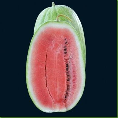 Watermelon Ali Baba