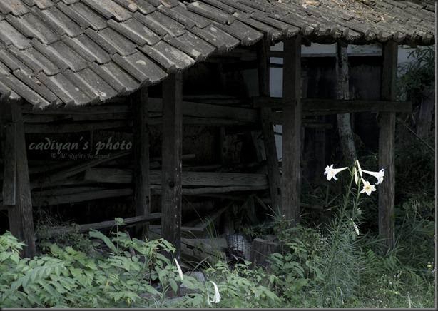 D700_2012-08-29_003_01