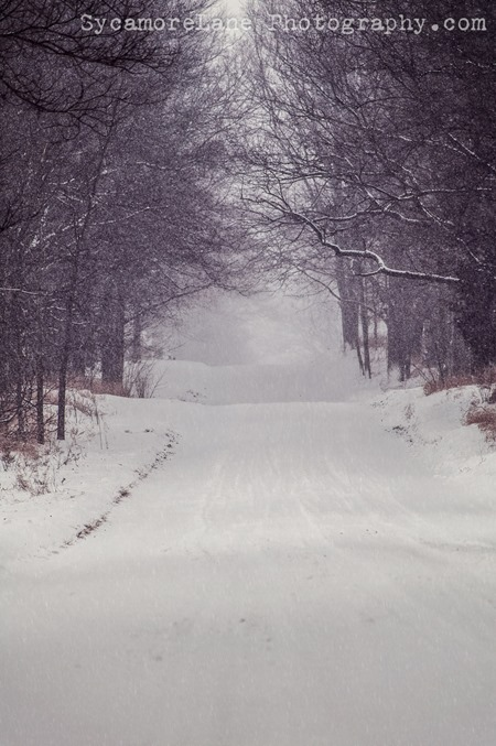 SycamoreLane Photography--wintry road
