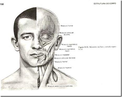 acupuntura estética curitiba rugas 4