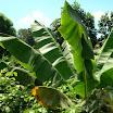 seychelles6_20070412_1491204541.jpg