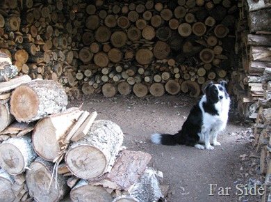 In the woodshed