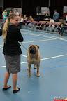 20130510-Bullmastiff-Worldcup-0257.jpg