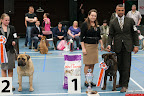 20130510-Bullmastiff-Worldcup-1229.jpg