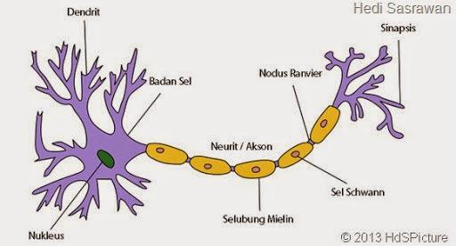gambar neuron