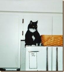 fridge cat