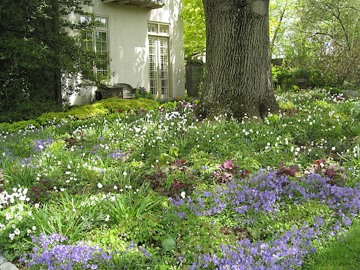 A planting like this makes me swoon - all meadowy and shady, under a mature tree. So romantic!