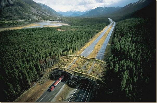 Ponts pour animaux - passages à faune (9)