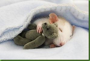 Ratinho com ursinho