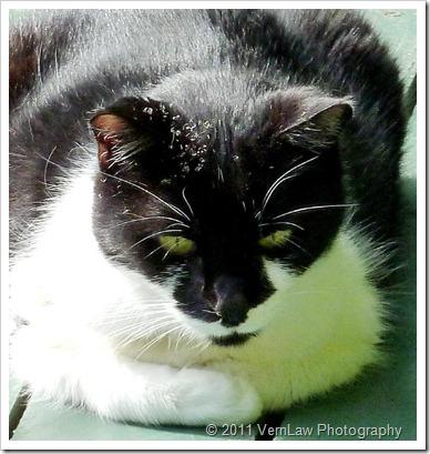 CatDeckp1010623