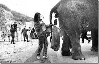 kopi tahi gajah blak ivory 2