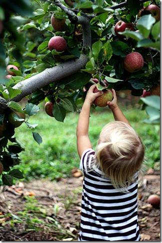Sadie apple picking 6