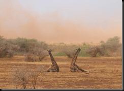 October 22, 2012 dust