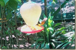 Butterfly feeding (Small)