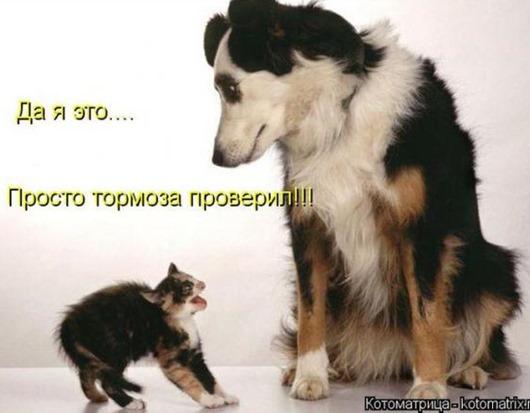 51ecce844128cb97d1c31c63096_prev