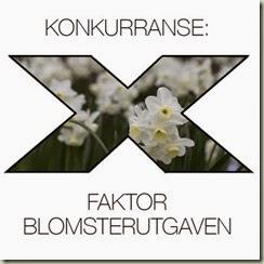 x-faktor-hvit