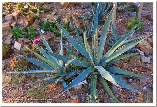 131203_TucsonBotanicalGarden_185