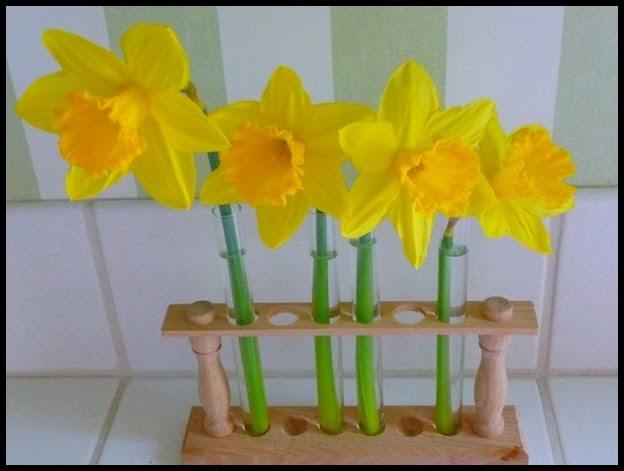 vignette daffodils 1