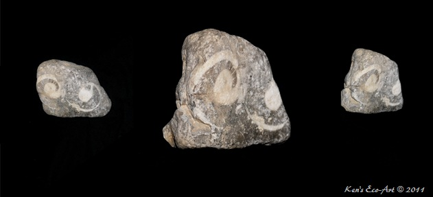 Rock Fossil