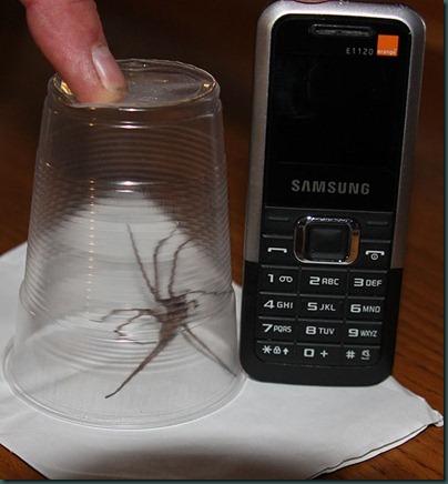 33-spider