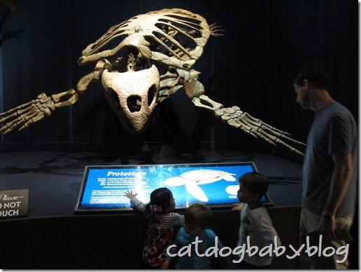 2013-03-29 Tellus Museum (19)