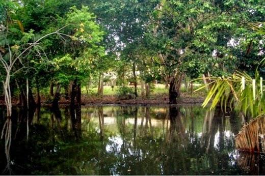 Floresta Nacional do Tapajós, Santarém - Parà