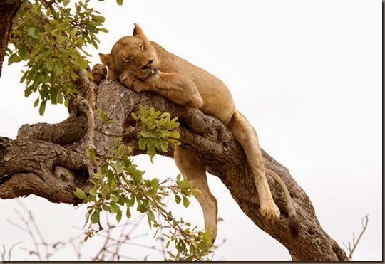 blog.lion-in-tree