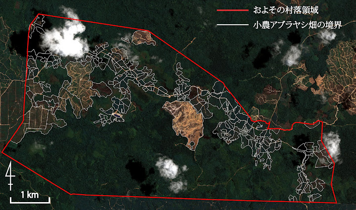 図1:衛星画像を用いたアブラヤシ畑の判別 / Fig.1: Oil palm platntations and their boundaries based on the satellite image