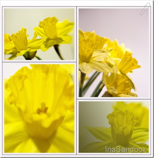 daffodil mosaic