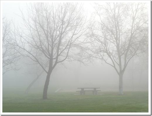 121211_fog_09