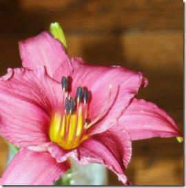 2011.8 indoor flowers-22