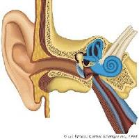 orelha e ouvido.jpg