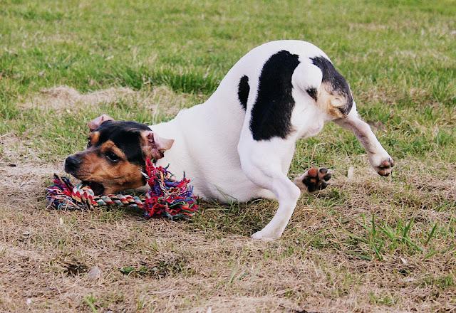 1 Hundar övrigt 4-8 maj 2013 399.jpg