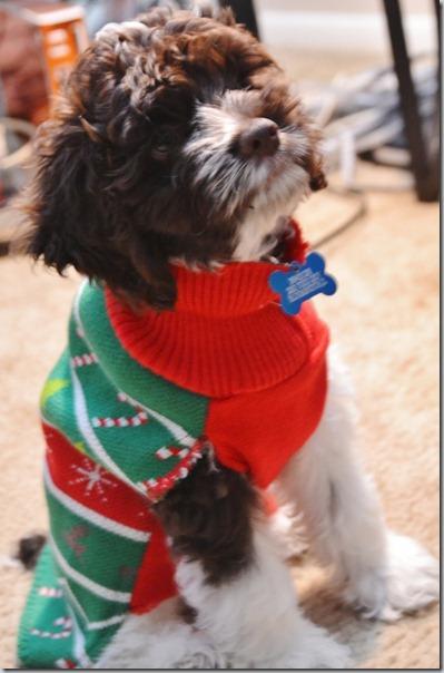 perro gorritos navidad (33)