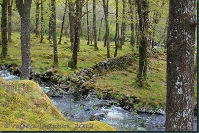 8-oak-woods