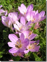 3,9,2011 včelí hoblování 390